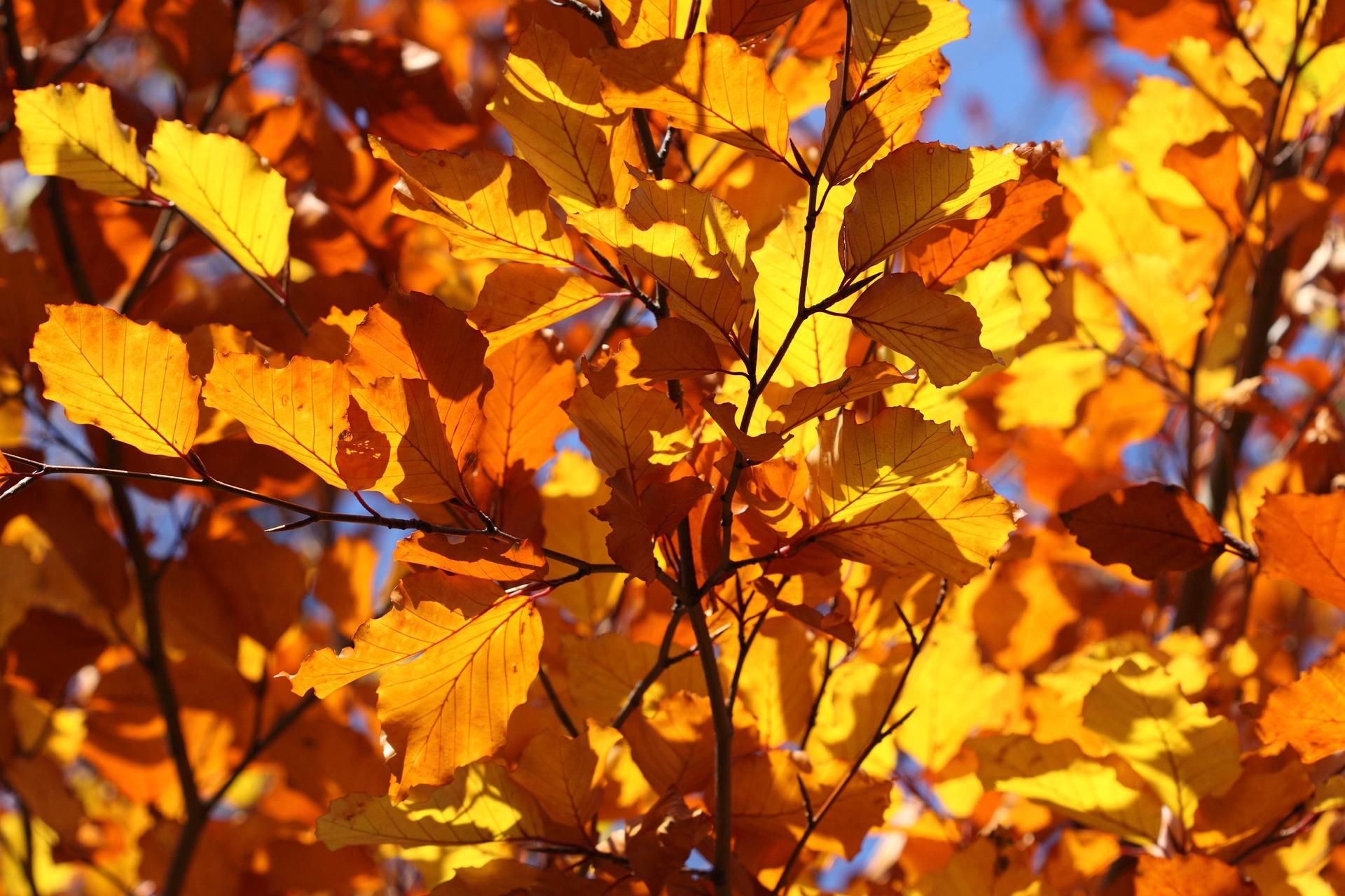 leaf-2012_1920