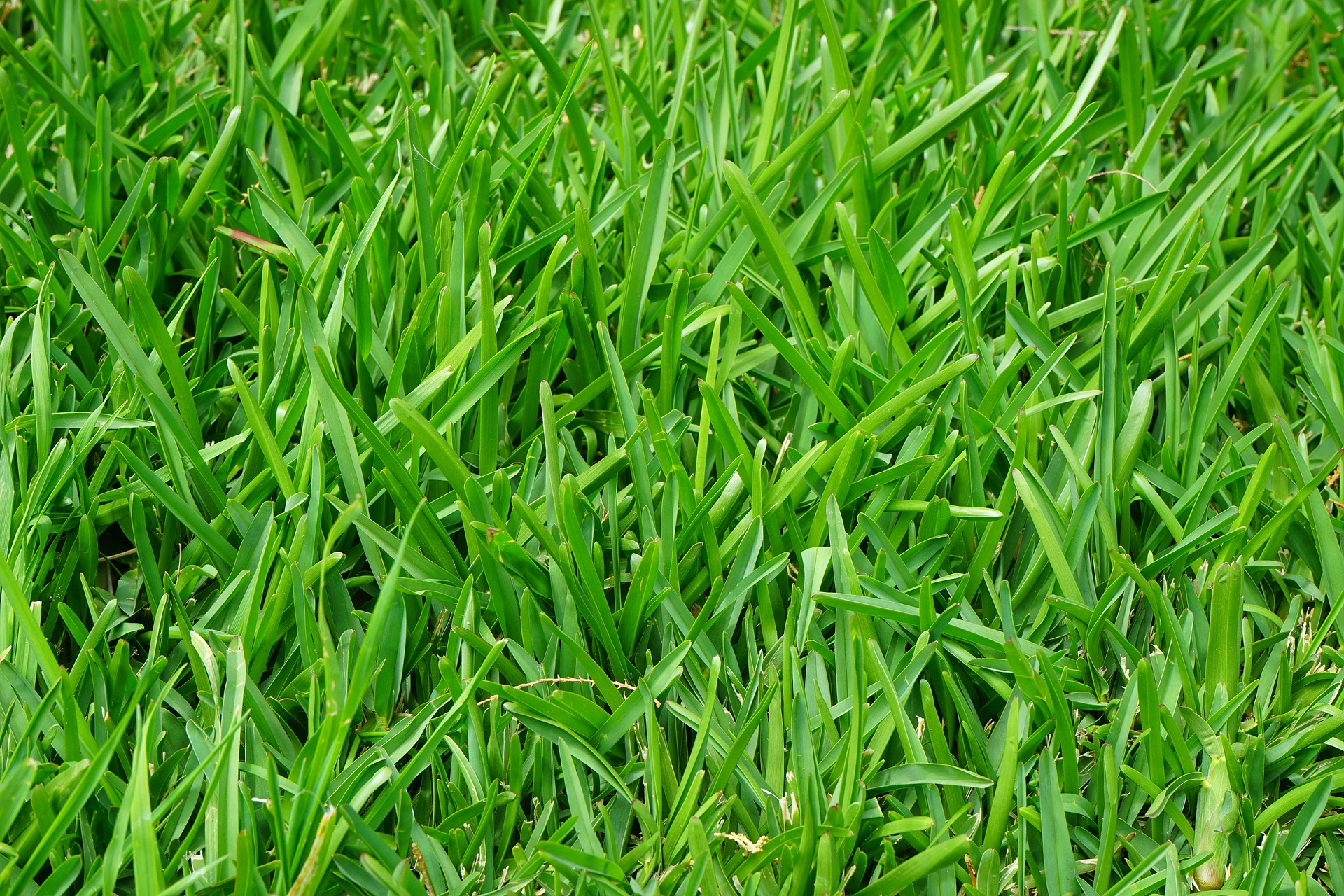 grass-375586_1920